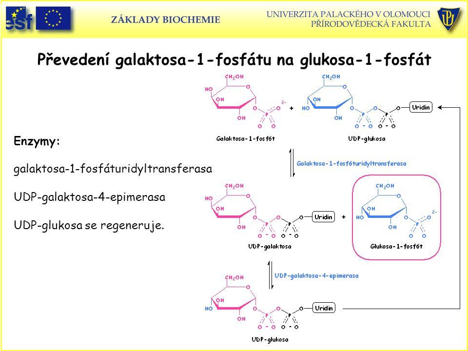Převedení galaktosa-1-fosfátu na glukosa-1-fosfát