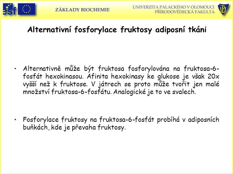 Alternativní fosforylace fruktosy adiposní tkáni