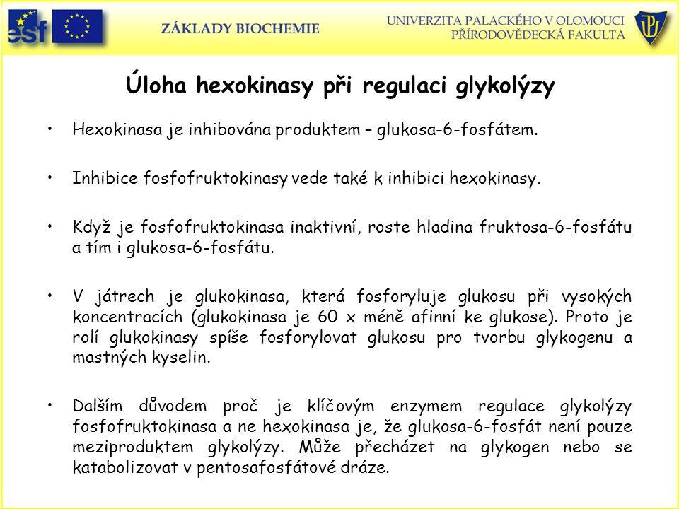 Úloha hexokinasy při regulaci glykolýzy