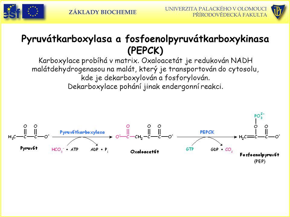 Pyruvátkarboxylasa a fosfoenolpyruvátkarboxykinasa (PEPCK) Karboxylace probíhá v matrix. Oxaloacetát je redukován NADH malátdehydrogenasou na malát, který je transportován do cytosolu, kde je dekarboxylován a fosforylován. Dekarboxylace pohání jinak endergonní reakci.