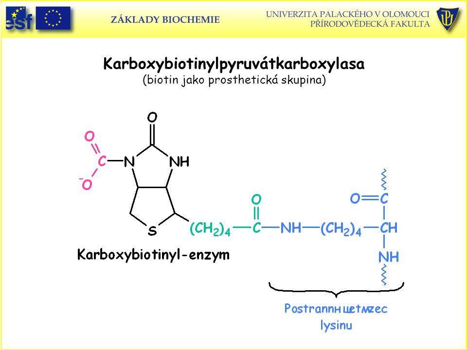 Karboxybiotinylpyruvátkarboxylasa (biotin jako prosthetická skupina)