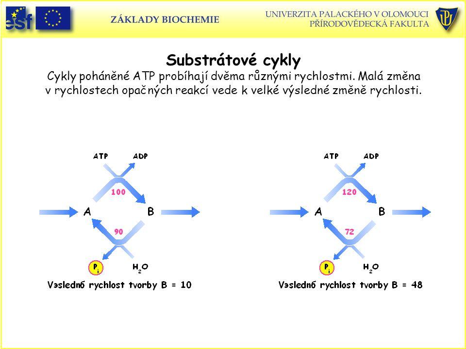 Substrátové cykly Cykly poháněné ATP probíhají dvěma různými rychlostmi. Malá změna v rychlostech opačných reakcí vede k velké výsledné změně rychlosti.