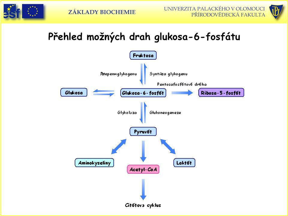 Přehled možných drah glukosa-6-fosfátu