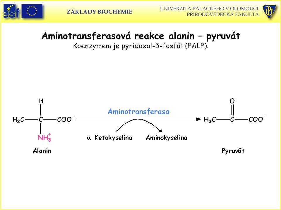 Aminotransferasová reakce alanin – pyruvát Koenzymem je pyridoxal-5-fosfát (PALP).