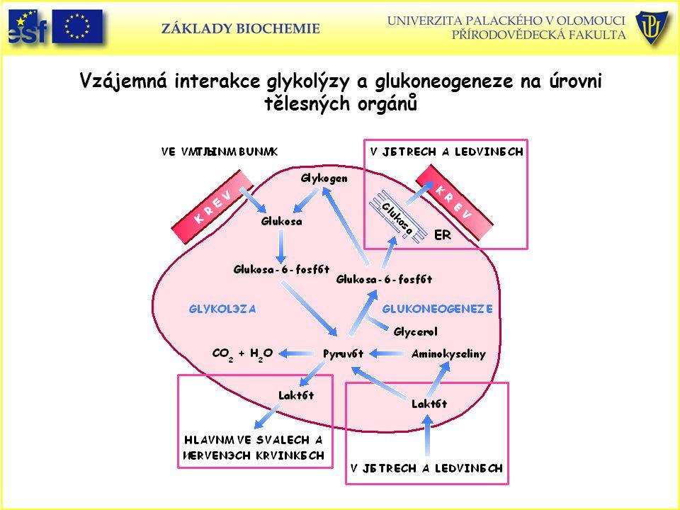 Vzájemná interakce glykolýzy a glukoneogeneze na úrovni tělesných orgánů