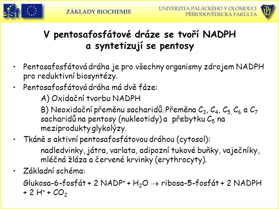 V pentosafosfátové dráze se tvoří NADPH a syntetizují se pentosy