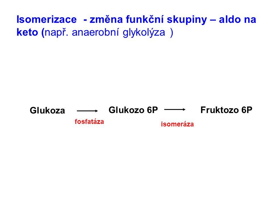 Isomerizace - změna funkční skupiny – aldo na keto (např