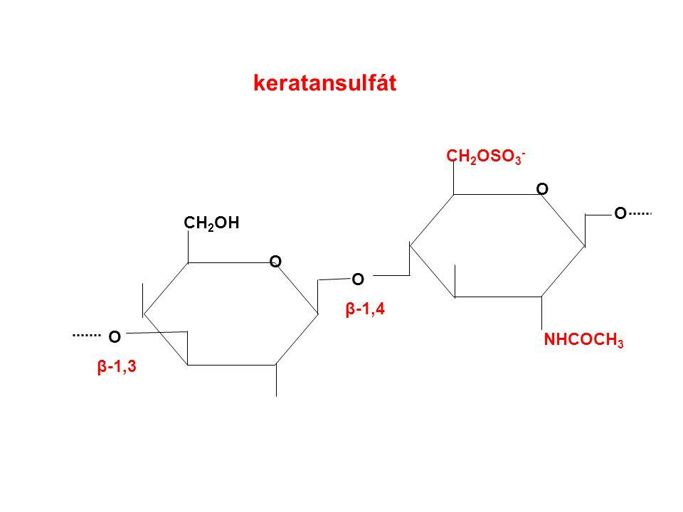 keratansulfát CH2OSO3- O O CH2OH O O β-1,4 O NHCOCH3 β-1,3