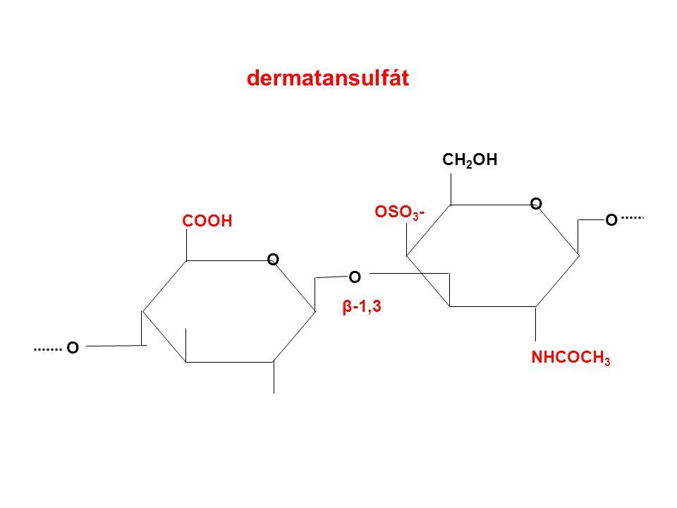 dermatansulfát CH2OH O OSO3- COOH O O O β-1,3 O NHCOCH3