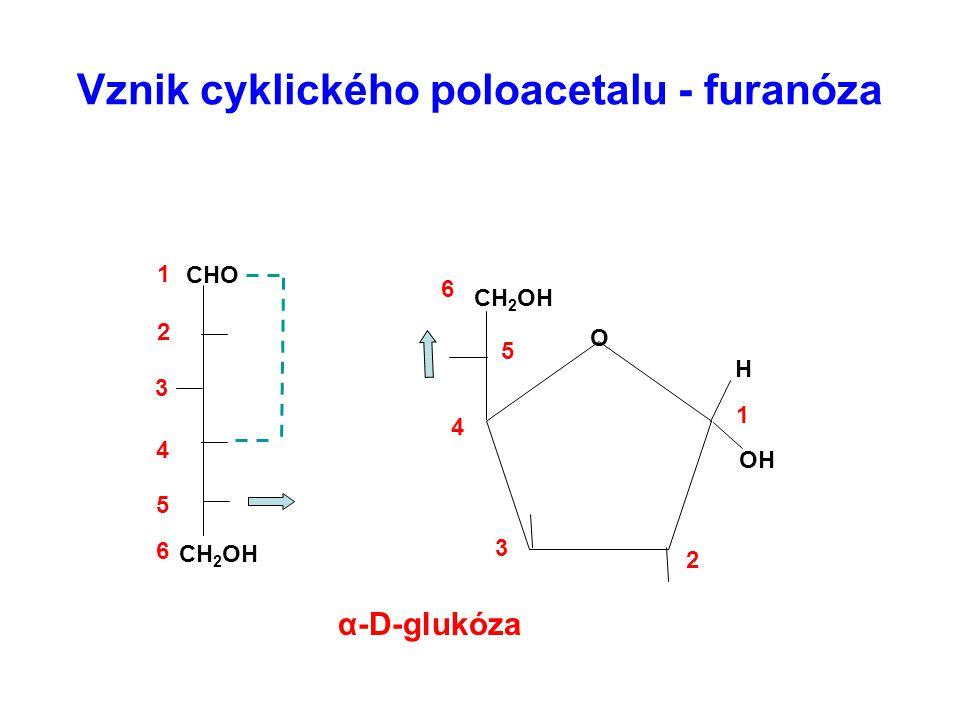 Vznik cyklického poloacetalu - furanóza