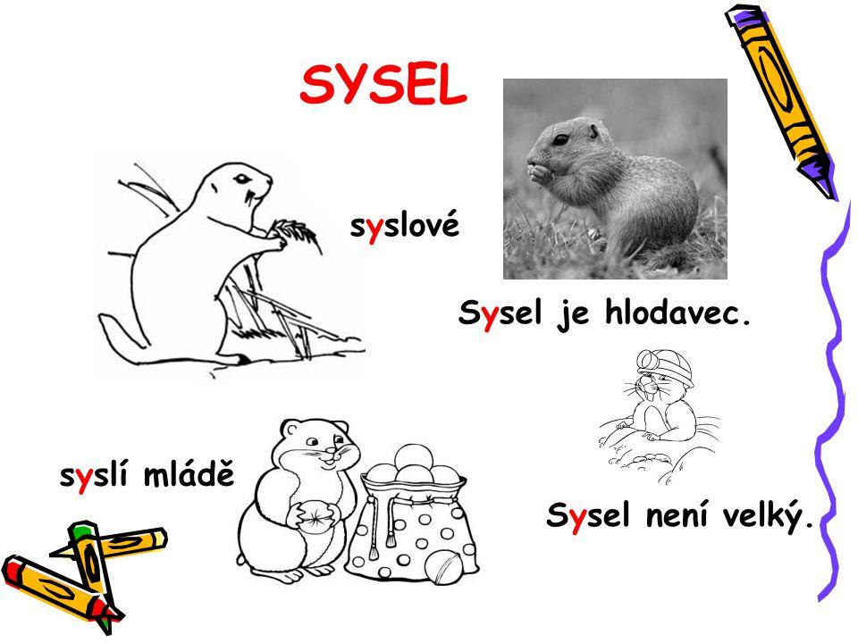 SYSEL syslové Sysel je hlodavec. syslí mládě Sysel není velký.