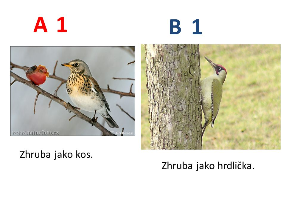 A B 1 Zhruba jako kos. Zhruba jako hrdlička.
