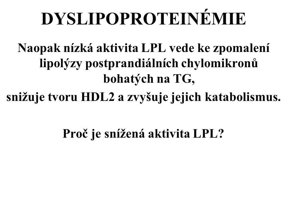 DYSLIPOPROTEINÉMIE Naopak nízká aktivita LPL vede ke zpomalení lipolýzy postprandiálních chylomikronů bohatých na TG,