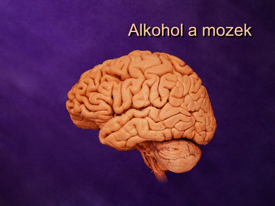 Alkohol a mozek