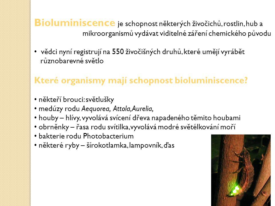 Bioluminiscence je schopnost některých živočichů, rostlin, hub a