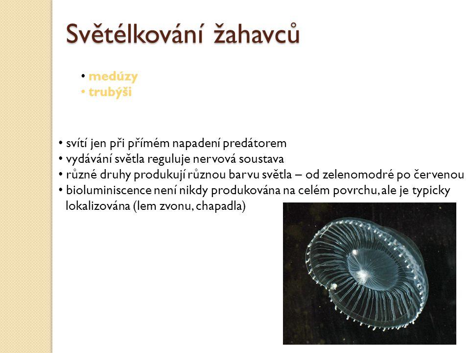 Světélkování žahavců medúzy trubýši