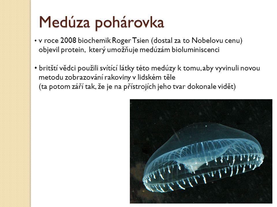 Medúza pohárovka v roce 2008 biochemik Roger Tsien (dostal za to Nobelovu cenu) objevil protein, který umožňuje medúzám bioluminiscenci.
