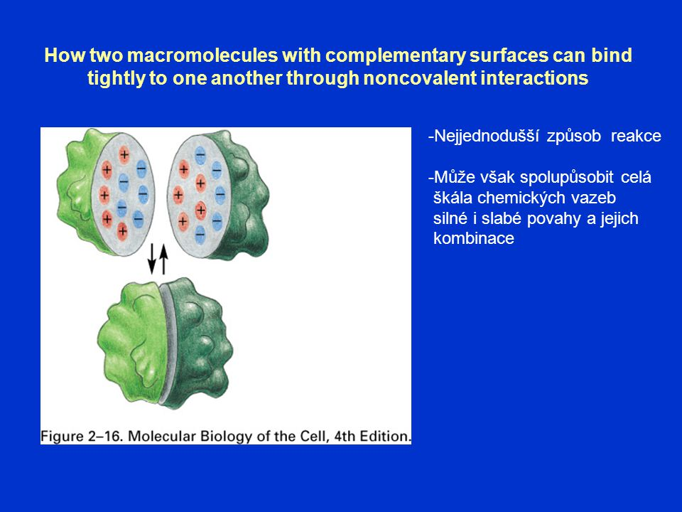 How two macromolecules with complementary surfaces can bind tightly to one another through noncovalent interactions