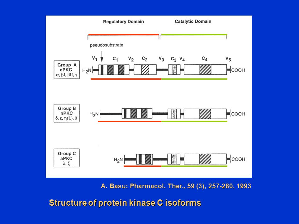 Structure of protein kinase C isoforms