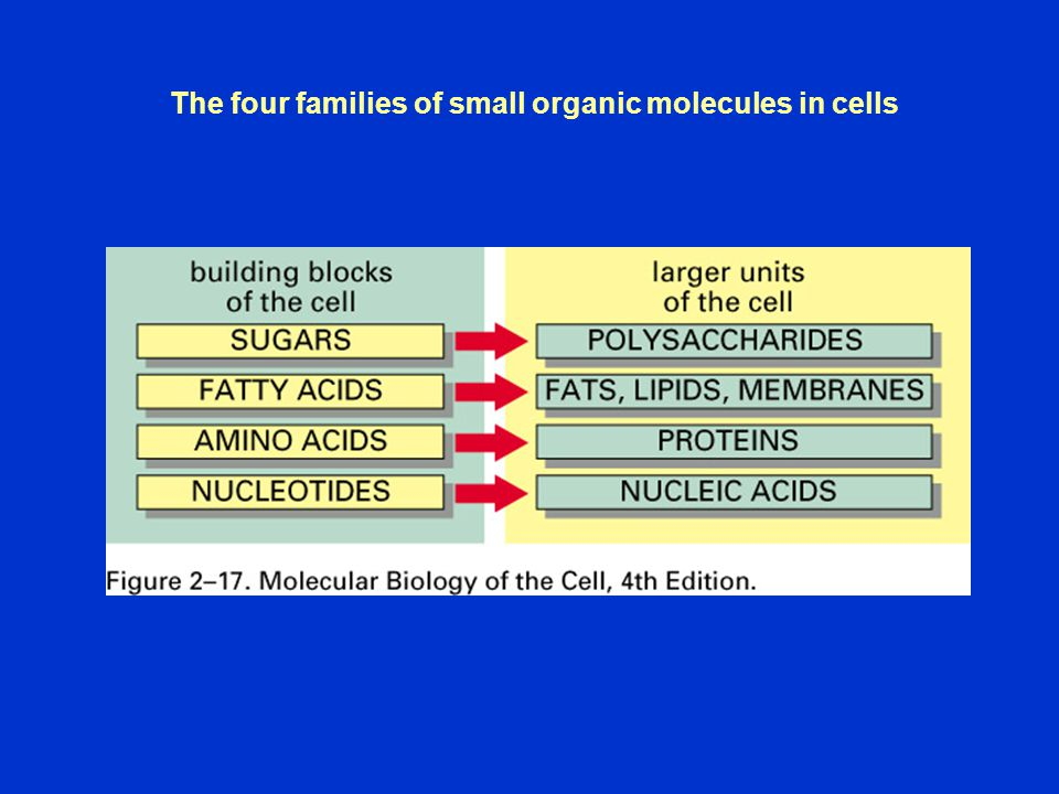 The four families of small organic molecules in cells