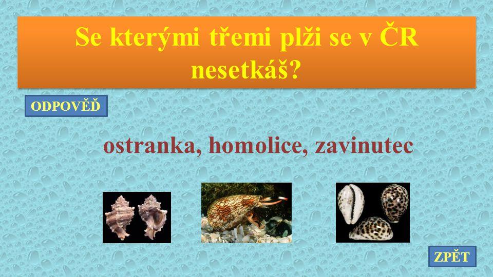 Se kterými třemi plži se v ČR nesetkáš ostranka, homolice, zavinutec