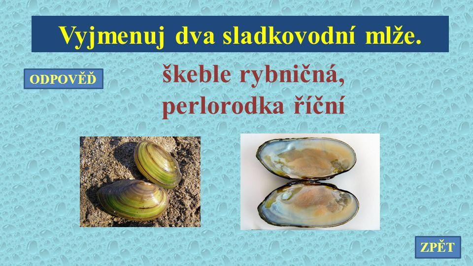 Vyjmenuj dva sladkovodní mlže. škeble rybničná, perlorodka říční