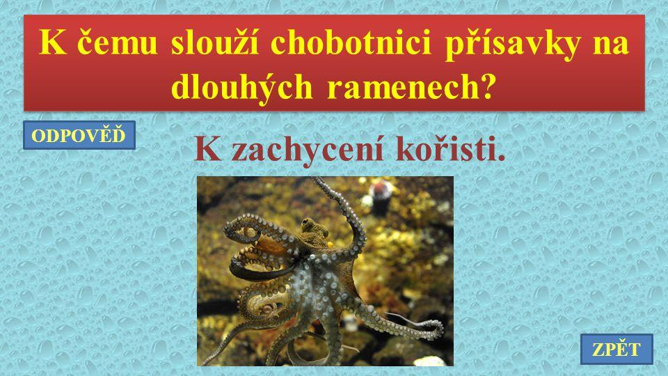 K čemu slouží chobotnici přísavky na dlouhých ramenech