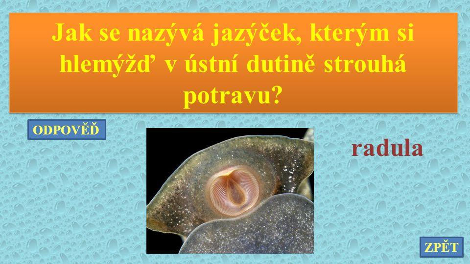 Jak se nazývá jazýček, kterým si hlemýžď v ústní dutině strouhá potravu