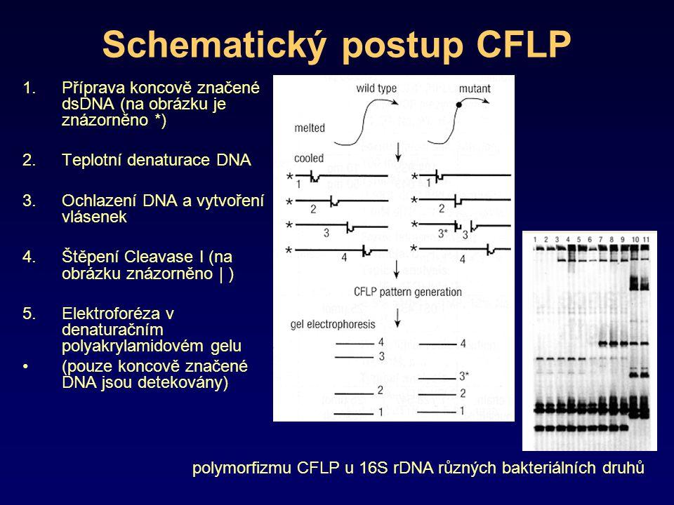 Schematický postup CFLP