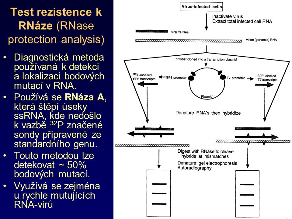 Test rezistence k RNáze (RNase protection analysis)