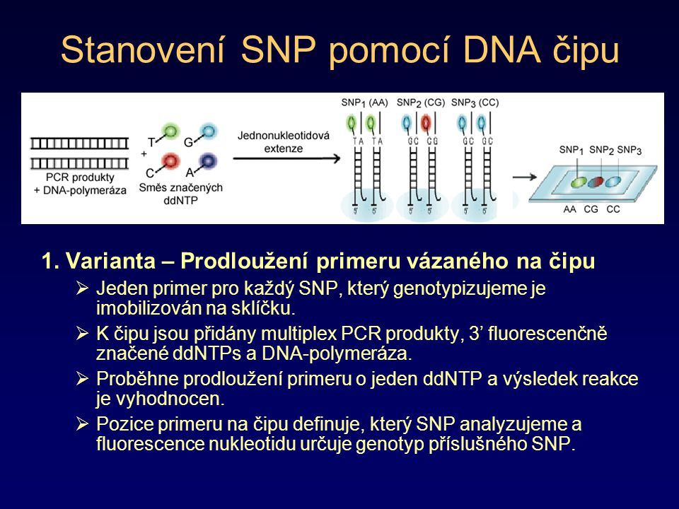 Stanovení SNP pomocí DNA čipu