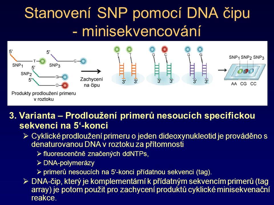 Stanovení SNP pomocí DNA čipu - minisekvencování