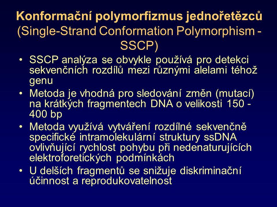 Konformační polymorfizmus jednořetězců (Single-Strand Conformation Polymorphism - SSCP)