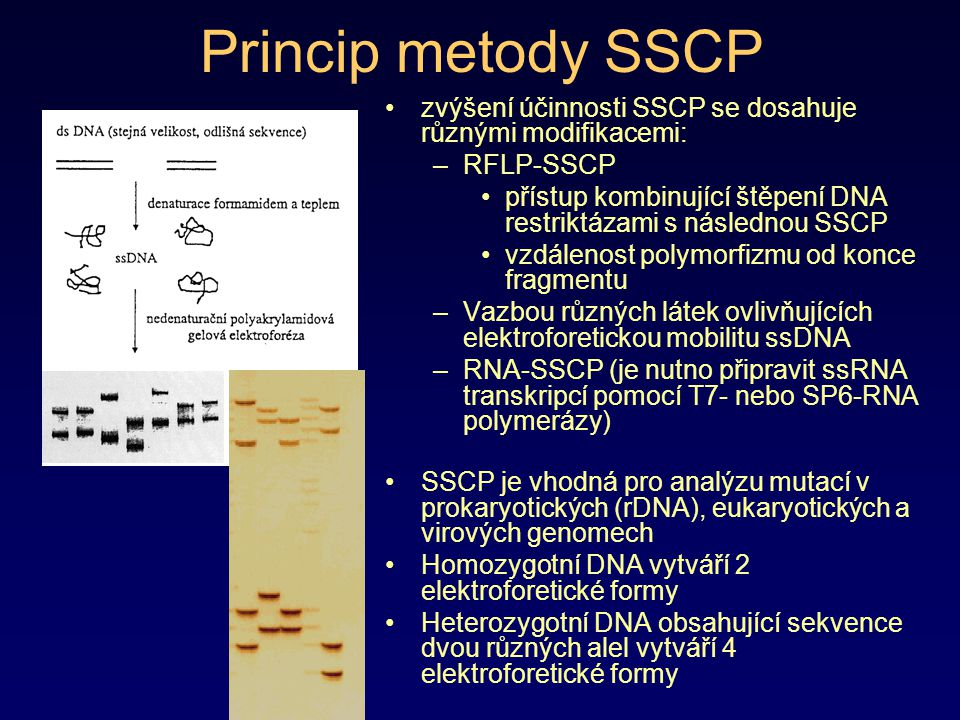 Princip metody SSCP zvýšení účinnosti SSCP se dosahuje různými modifikacemi: RFLP-SSCP.