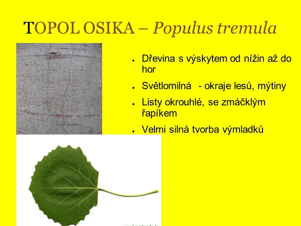 TOPOL OSIKA – Populus tremula