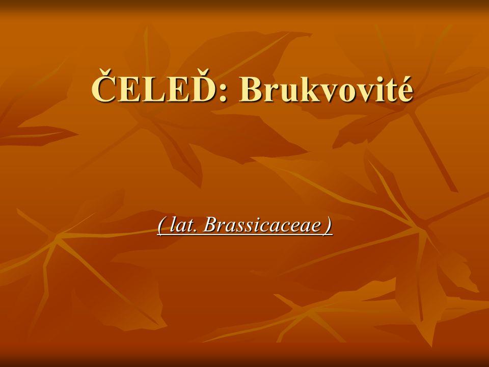 ČELEĎ: Brukvovité ( lat. Brassicaceae )