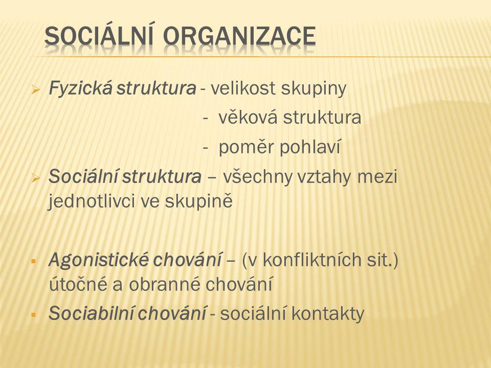 Sociální organizace Fyzická struktura - velikost skupiny