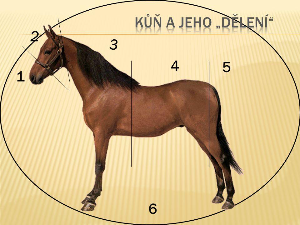 """Kůň a jeho """"dělení 2 3 4 5 1 6"""