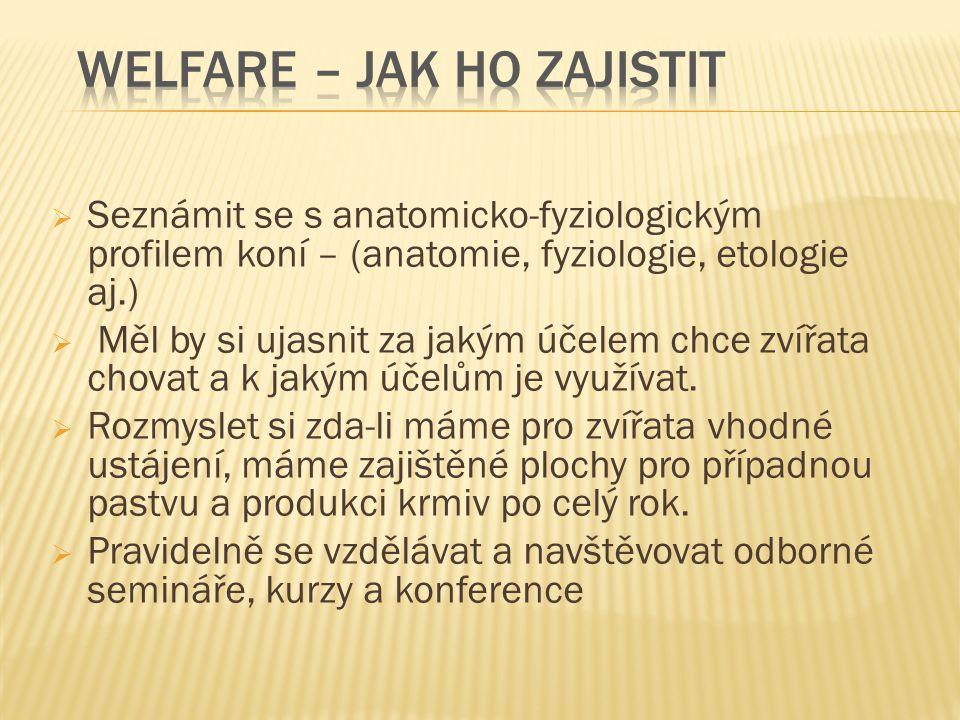 Welfare – Jak ho zajistit