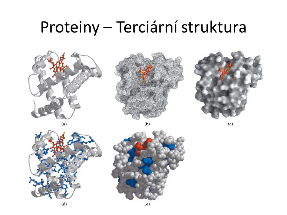 Proteiny – Terciární struktura