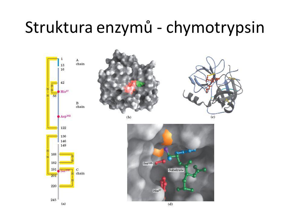 Struktura enzymů - chymotrypsin