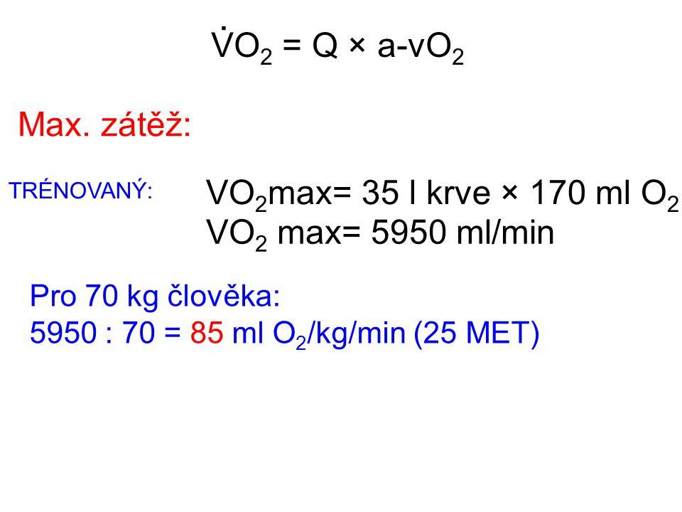 . VO2 = Q × a-vO2 Max. zátěž: VO2max= 35 l krve × 170 ml O2