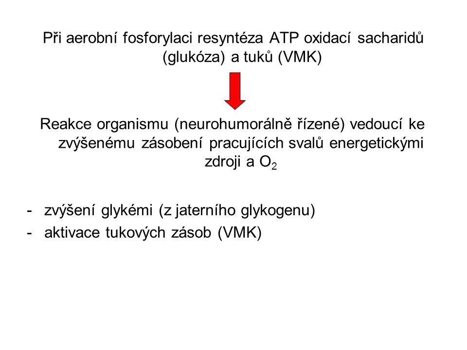 Při aerobní fosforylaci resyntéza ATP oxidací sacharidů (glukóza) a tuků (VMK)