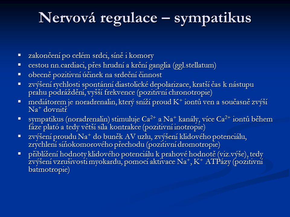 Nervová regulace – sympatikus