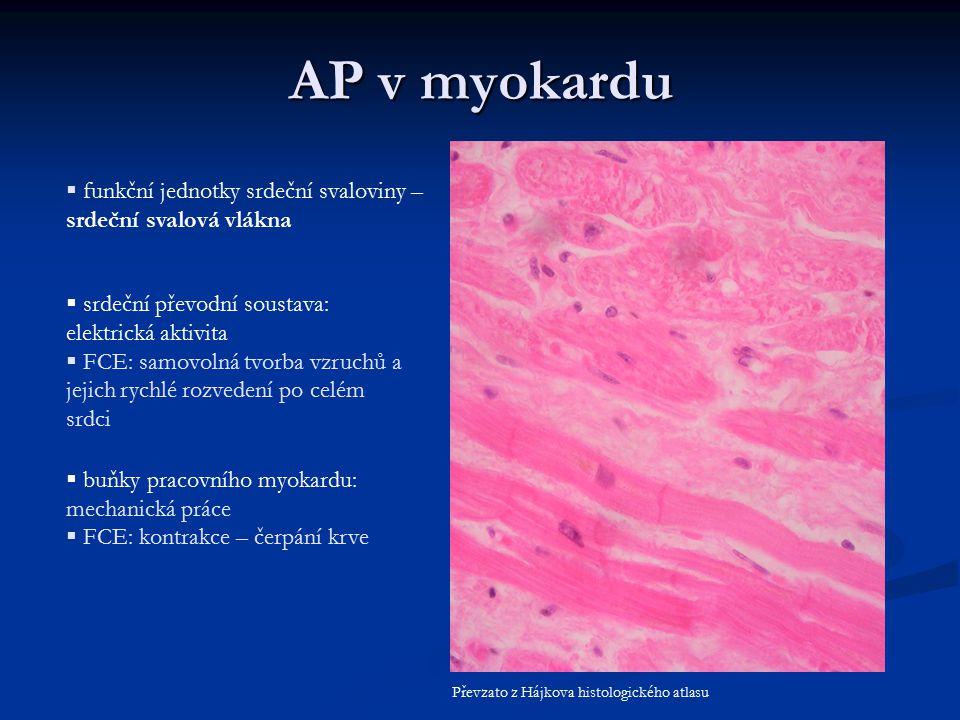 AP v myokardu funkční jednotky srdeční svaloviny – srdeční svalová vlákna. srdeční převodní soustava: elektrická aktivita.