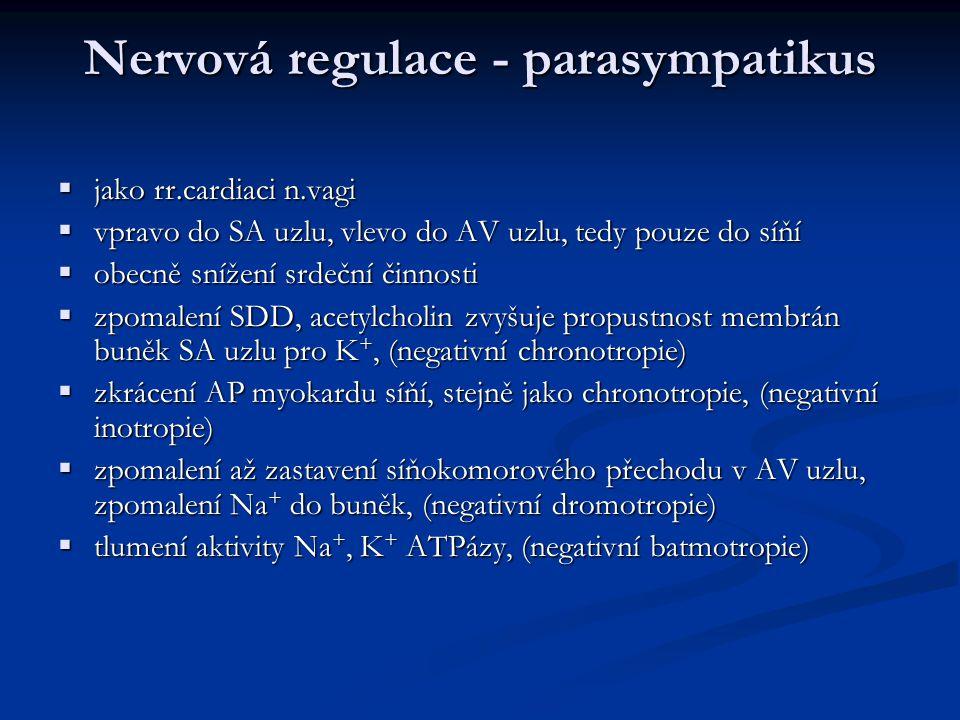 Nervová regulace - parasympatikus