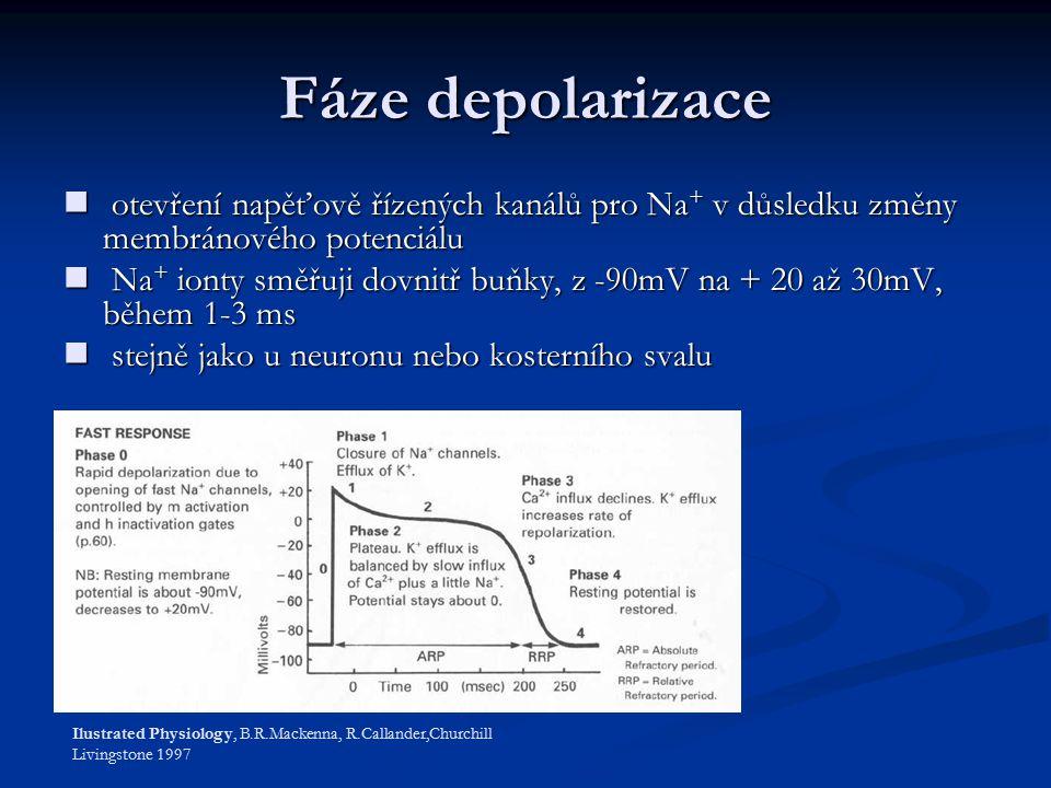 Fáze depolarizace otevření napěťově řízených kanálů pro Na+ v důsledku změny membránového potenciálu.