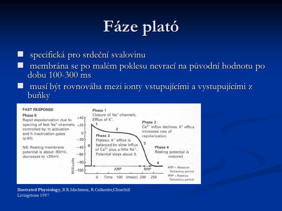 Fáze plató specifická pro srdeční svalovinu