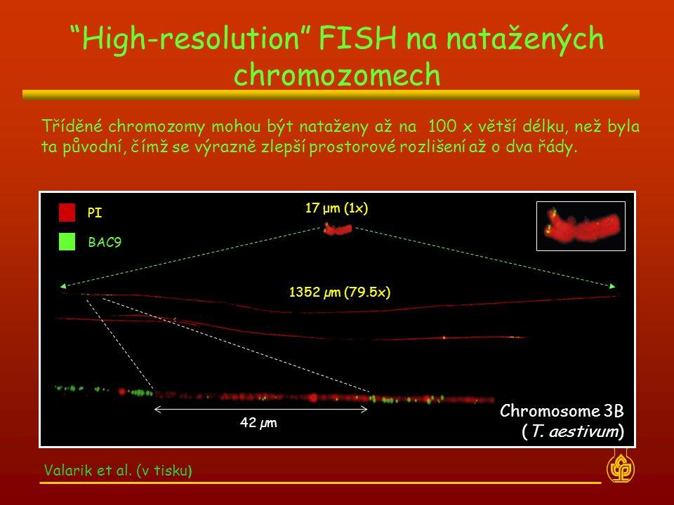 High-resolution FISH na natažených chromozomech