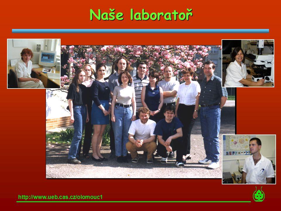 Naše laboratoř http://www.ueb.cas.cz/olomouc1